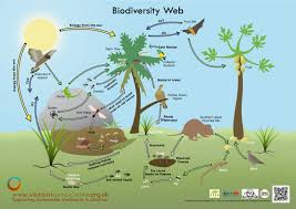 Biodiversity is crucial for South Africa's food security