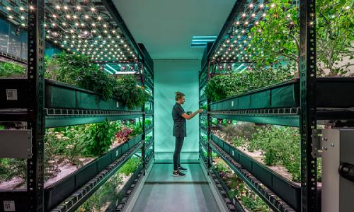 Is soil-free farming the future?